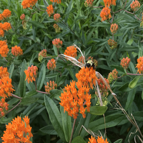 Pollinators enjoying our park flora on the trails